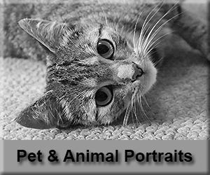 Pet and Animal Photography Lanarkshire